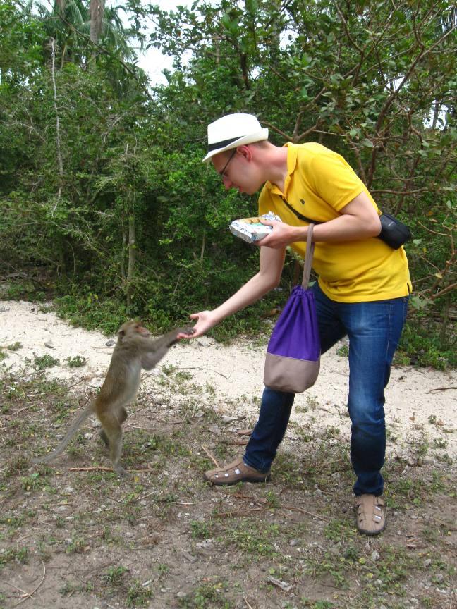 Фото кормление обезьян с руки на острове близ Нячанга