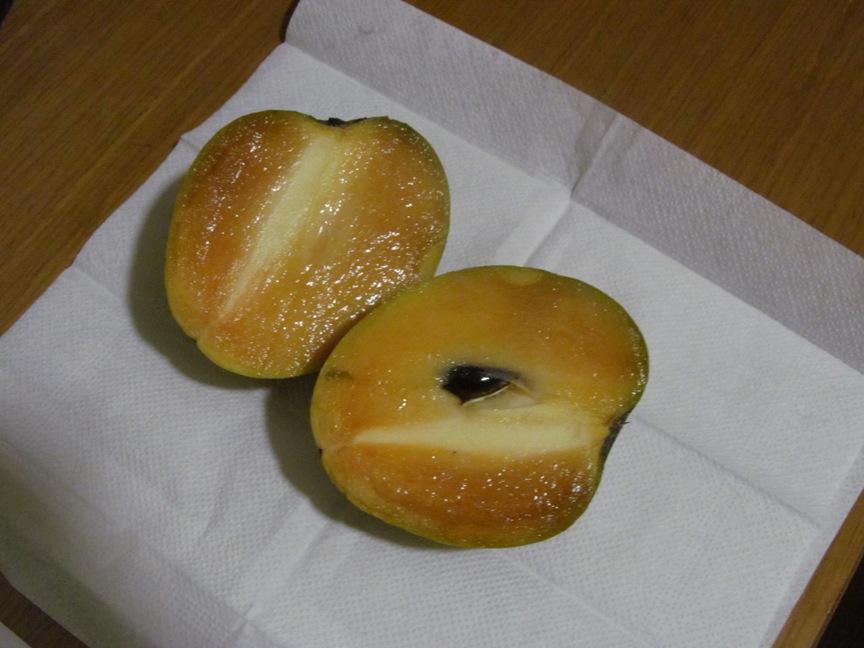 Фото фрукта Саподилло в Нячанге