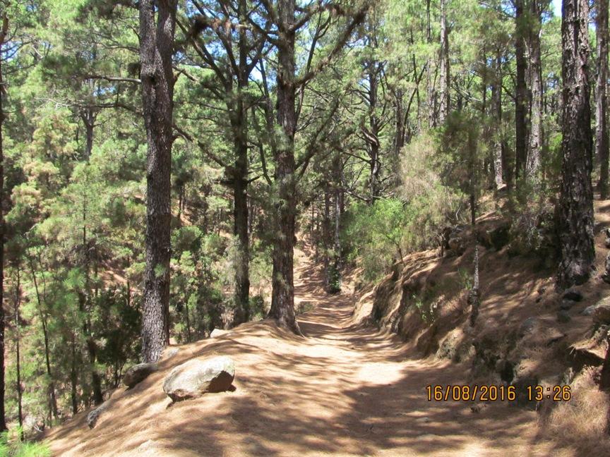Лес на Тенерифе