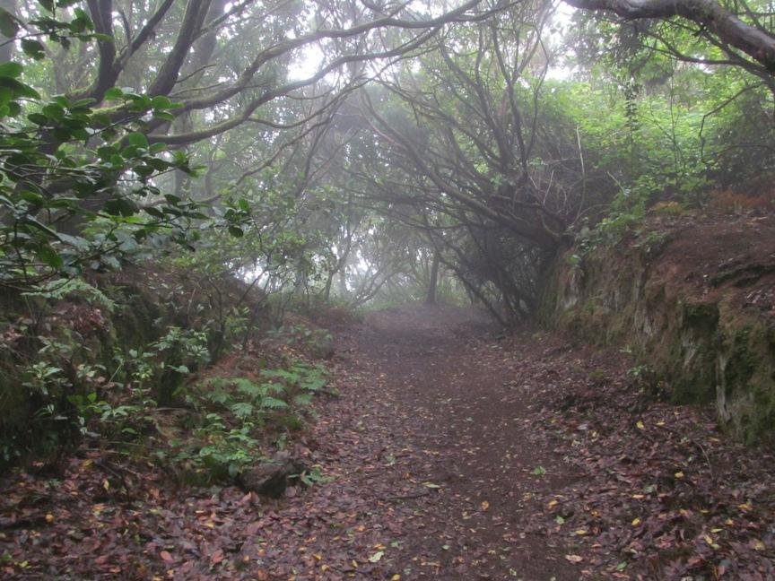 Реликтовый лавровый лес на Тенерифе
