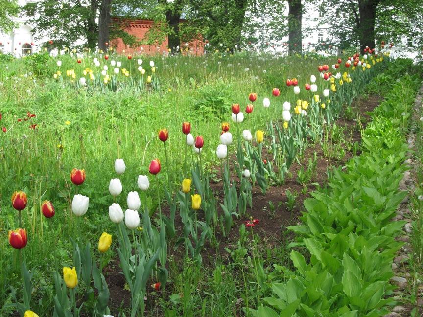 Тюльпаны у монастыря фото