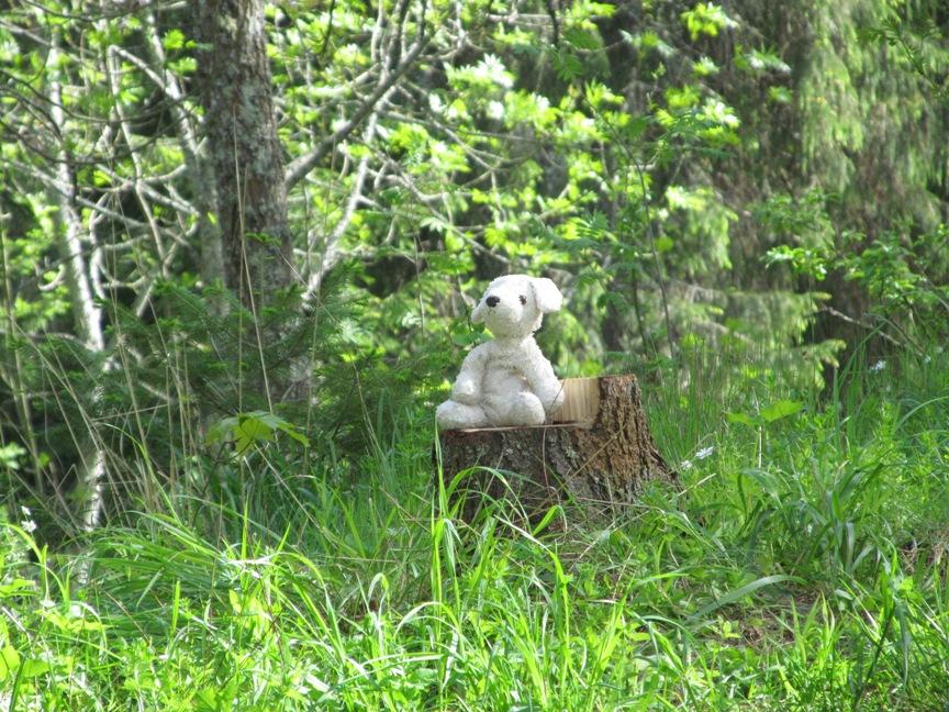 Медведь в лесу на Валааме