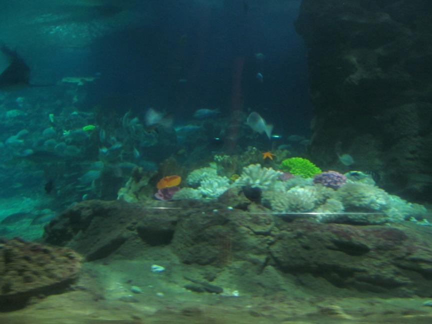 Фото из океанариума Винперл