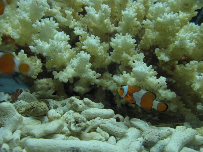 Океанариум VinPearl фото