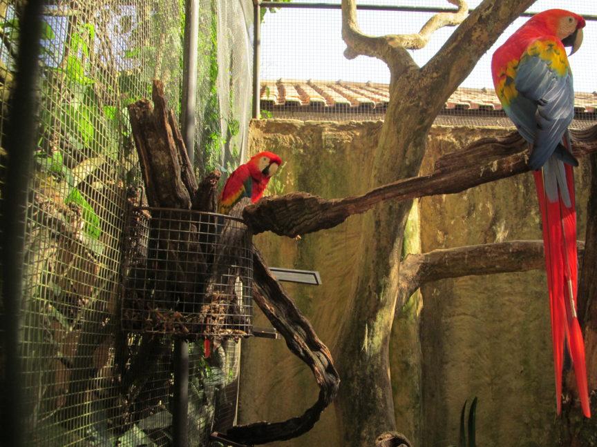 Попугай Ара в Бразилии