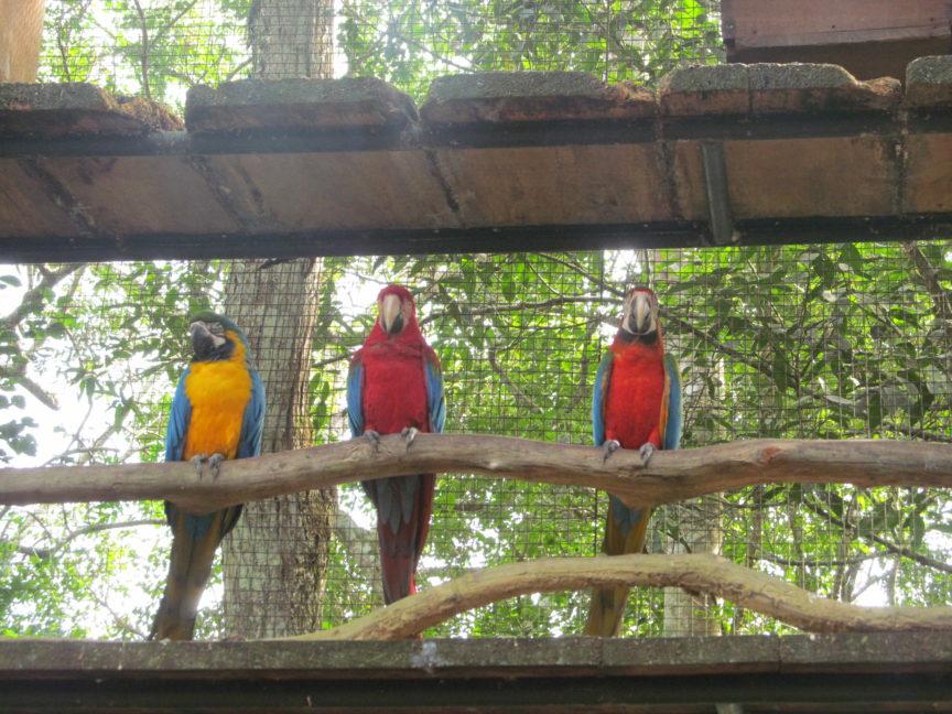 фото, попугаи, бразилия