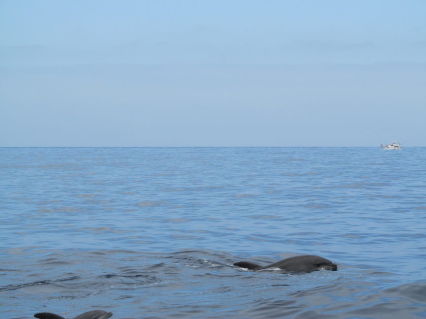 фото дельфинов в лос-гигантесе