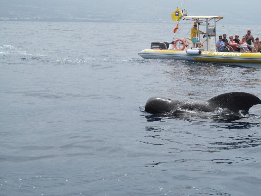 фото кита в лос-гигантесе